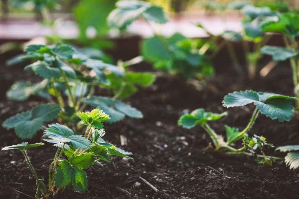 best manure for garden