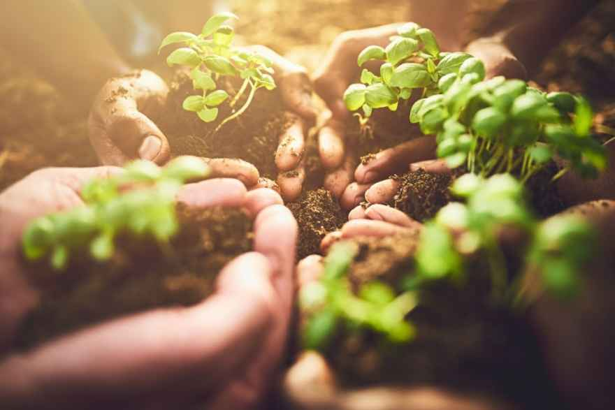 best soil amendment